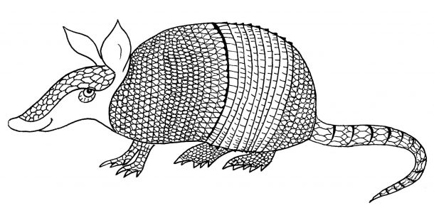 Armadillo coloring book