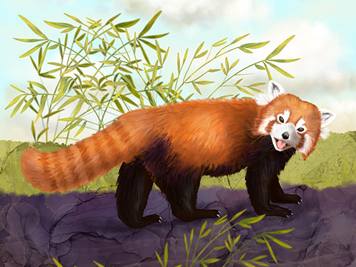 Cute Red Panda Art
