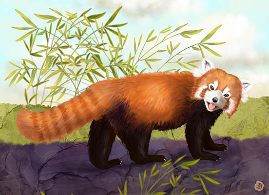 Cute Red Panda - Nature Illustration