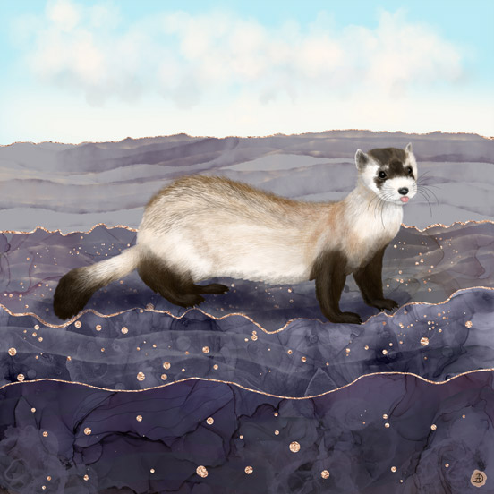 Black Footed Ferret Art Painting