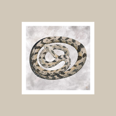 Vintage snake wall art, matched with Sherwin Williams Accessible Beige color.