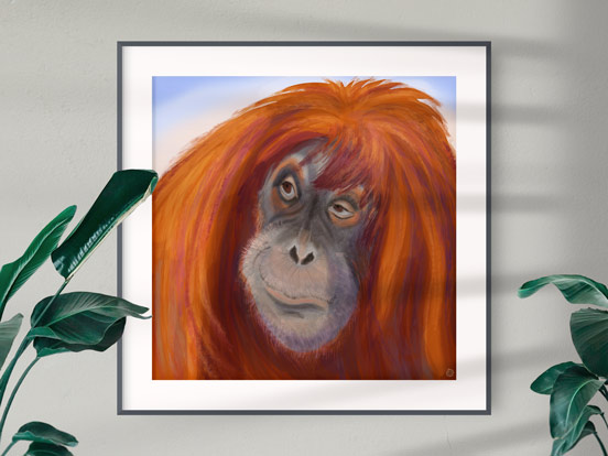 Orangutan portrait - framed art print