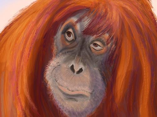 Sumatran Orangutan Art